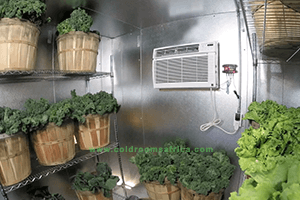 fruits-and-vegetable_cold_room_vacker__global_africa